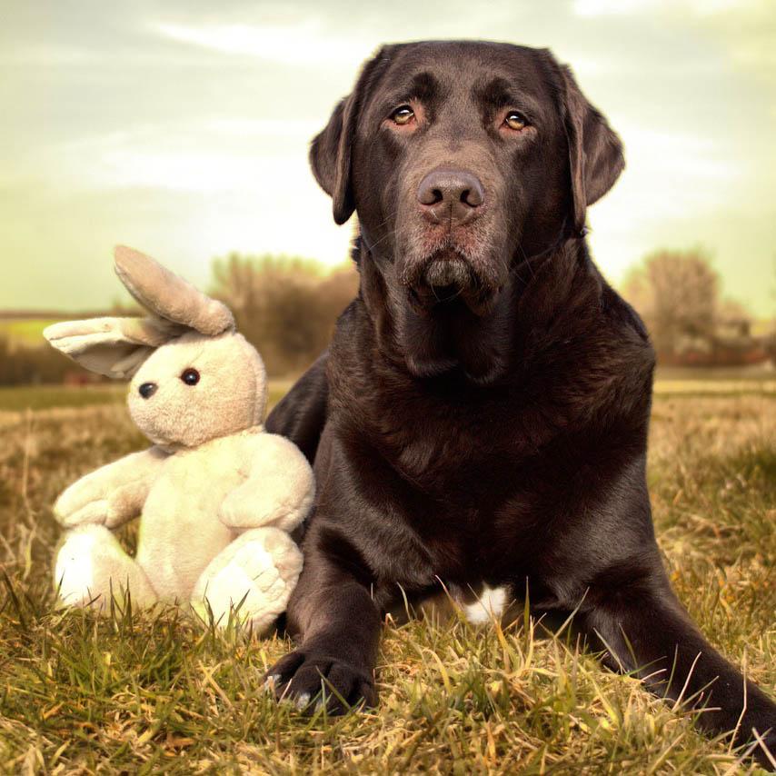 Ein Hund, der 10 Hasen jagt...