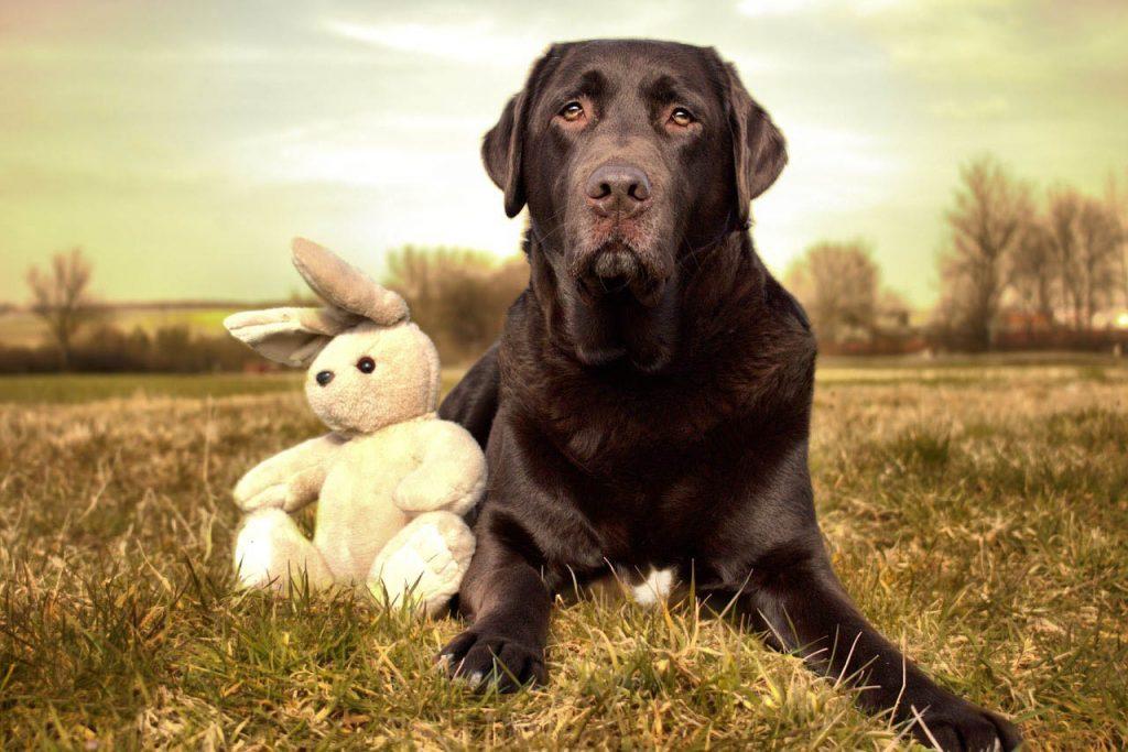 Ein Hund, der 10 Hasen jagt...gross